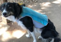 Dog Existence Jackets Keep Summer time Safe And Fun