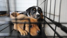 Adopting a dog From your Pet Shelter