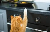 People Foods Your Cat Should Not Eat!