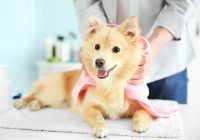 Grooming Your Dog Tips – 5 Things It Is Recommended To Know