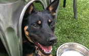 A Proper Dog – 9 Area's To Keep Close Track Of