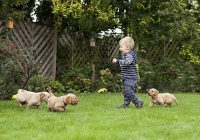 5 Methods To Socialize Your Pet