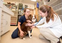 Tools and Programs Employed by Veterinary Assistants