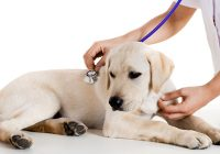 Bridging the space Between Veterinary Hospitals and Pet Proprietors