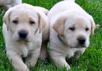 10 Things You Must Know About Your Brand-new Puppy