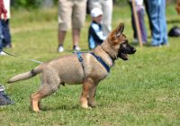 Canine Training: In The Event You Start Puppy Training Early?
