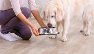 Choosing the proper Puppy Food