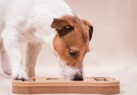 Behavioural Problems in Dogs and How to Correct Them