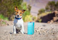 Top Tips One Should Know for Boarding Your Pets