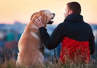 Effects Of Having A Pet In Our Mental Health – Barking Heads
