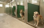 Dog Kennel Vs Pet Sitter – Which is the Best Option?
