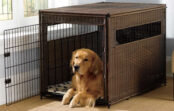Best Advantages Of Using A Dog Carrier