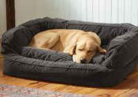 An Overview of Dog Beds