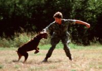 4 Reasons to Have Your Dog Trained by a Professional