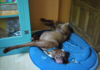 Methods of cooling dogs on hot days